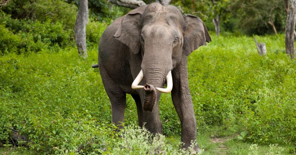 Essay On Elephant In Hindi Language Hathi Par Nibandh Hind Wildlife Day Animals An