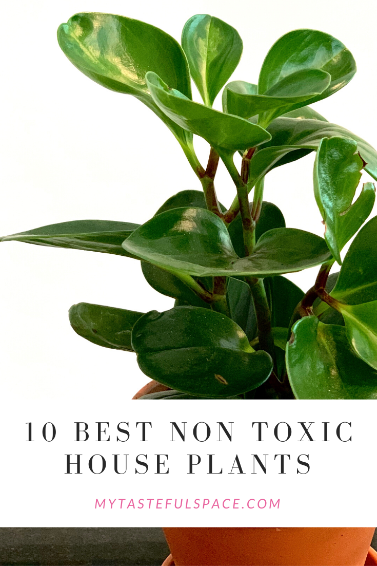 10 Best Non-Toxic Houseplants That are Safe For Children ...
