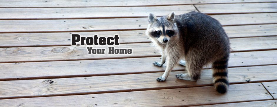 If you have squirrels in your attic or other invading