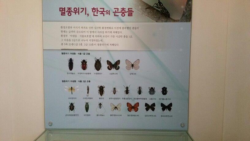 멸종위기 한국곤충들