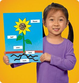 Thanks For Pinning Lakeshore S Parts Of A Sunflower Alyssa This Free Hands On Craft Project Is A Gre Lakeshore Learning Preschool Science Teaching Preschool