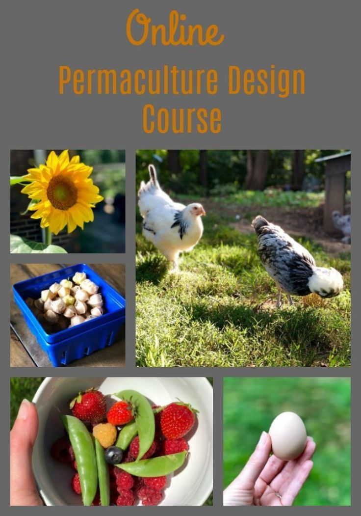 Find out if an online permaculture course is right for you ...