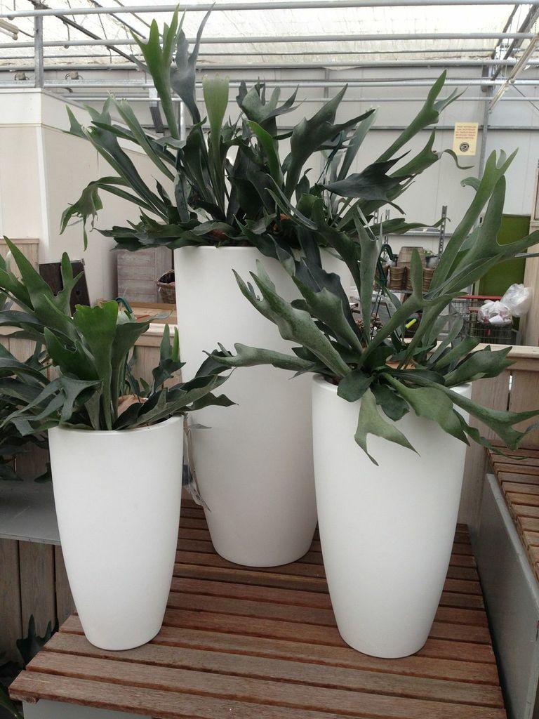 Grote kamerplanten grote plantenbakken chicplants for Grote kamerplanten