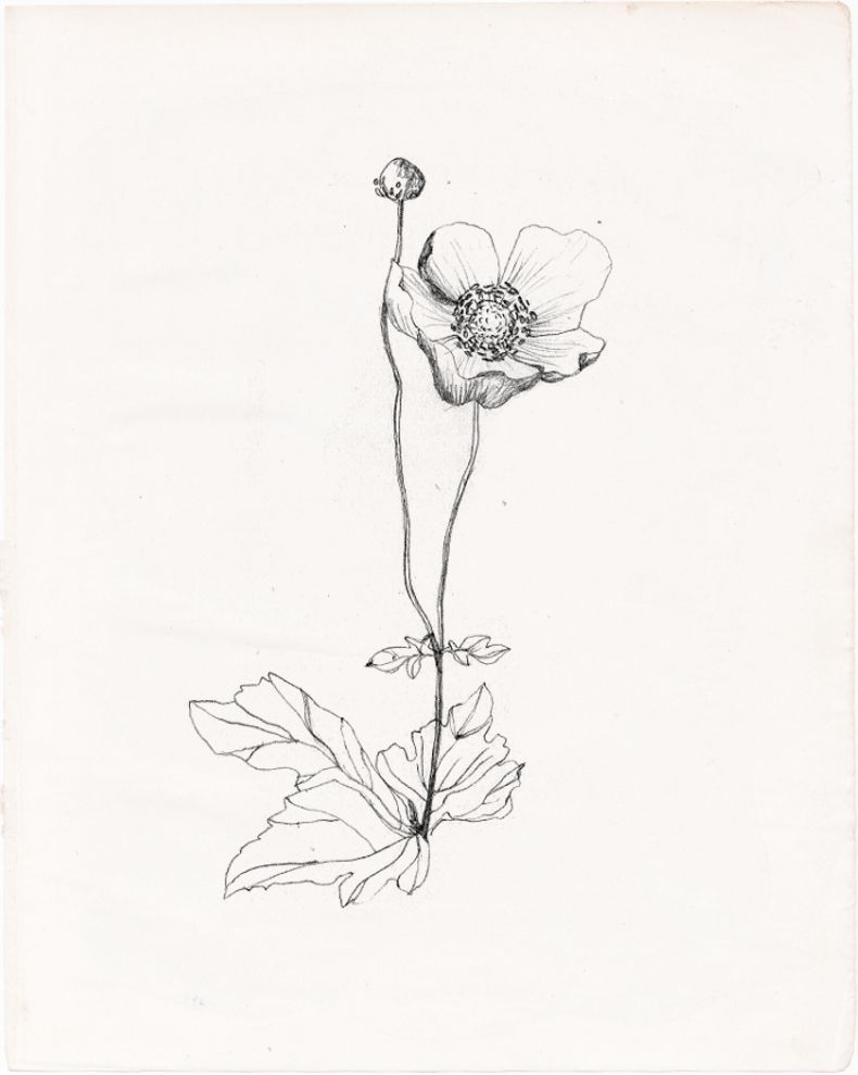 Wildflower Line Drawing : Wildflower drawing tumblr pinterest