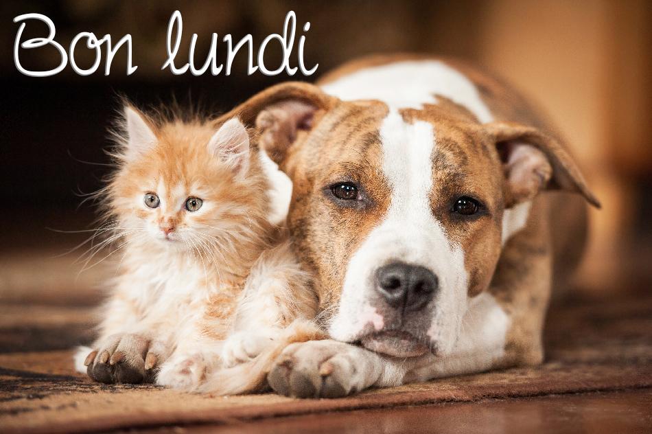 Cartes Virtuelles Bon Lundi Joliecarte Animaux Les Plus Mignons American Terrier Entre Chien Et Chat