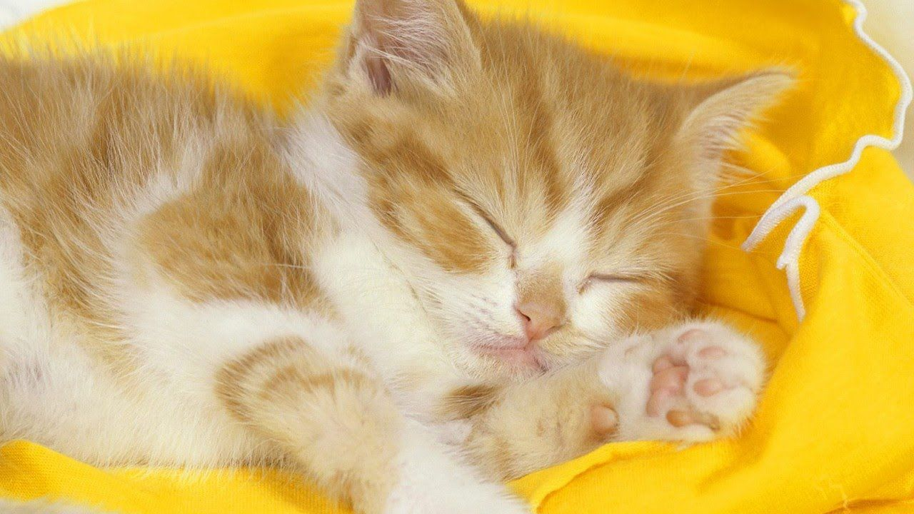 funny pictures of kittens cute kittens compilation more kittens