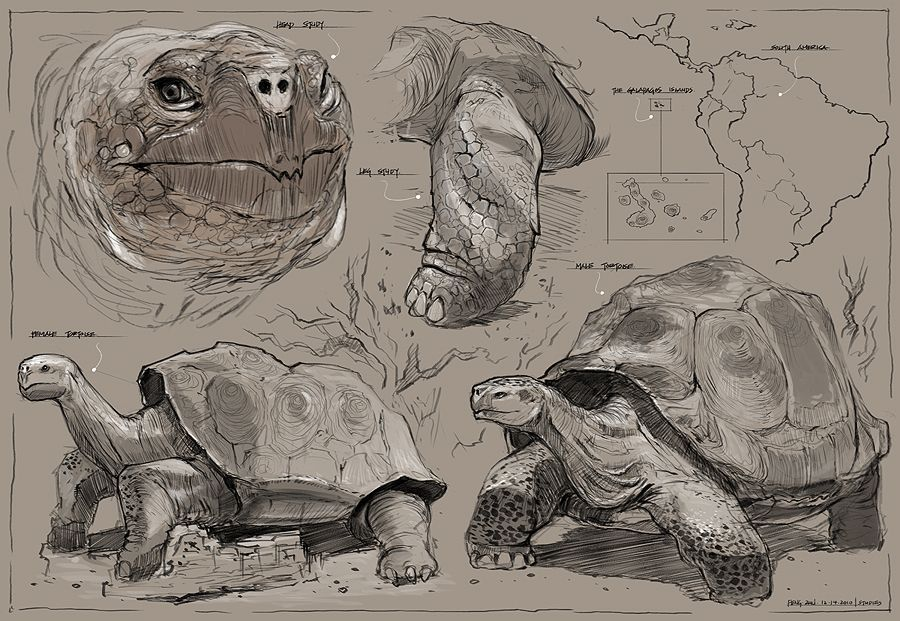 Feng Zhu Design | Tortoise Care | Pinterest | Tortoise care and ...