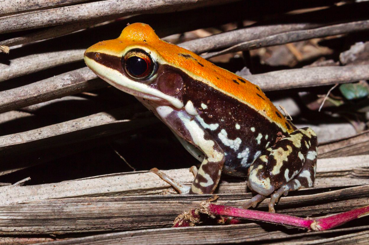 #Slime from FROGS 'may be able to cure the flu' - Yahoo News: Yahoo News Slime from FROGS 'may be able to cure the flu' Yahoo News It has…