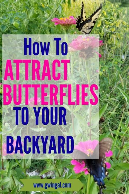 Attracting Butterflies to Your Backyard (With images ...