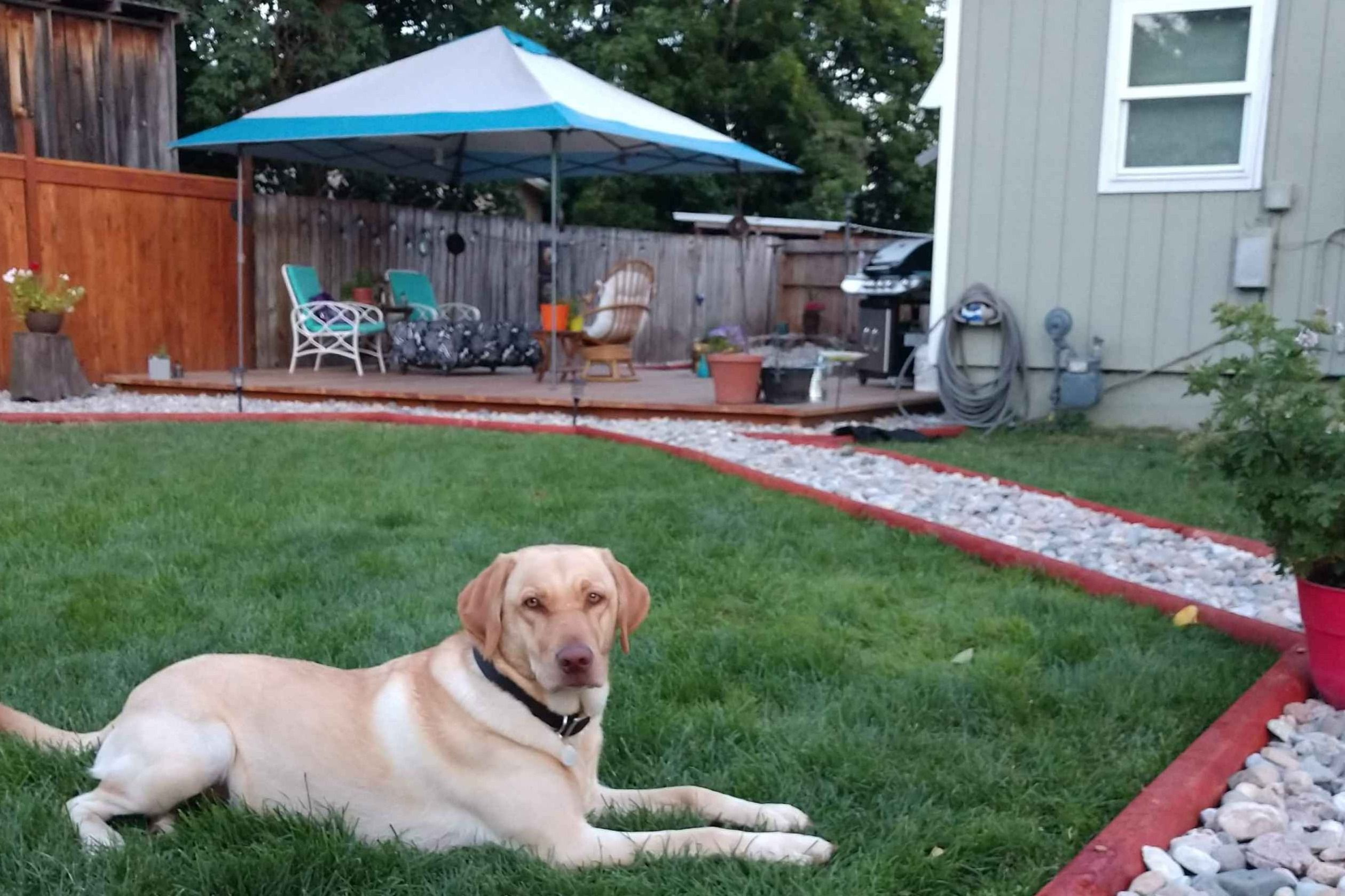 Tamara Olshefski Has Puppies For Sale On Akc Puppyfinder Akc Puppies For Sale Labrador Retriever