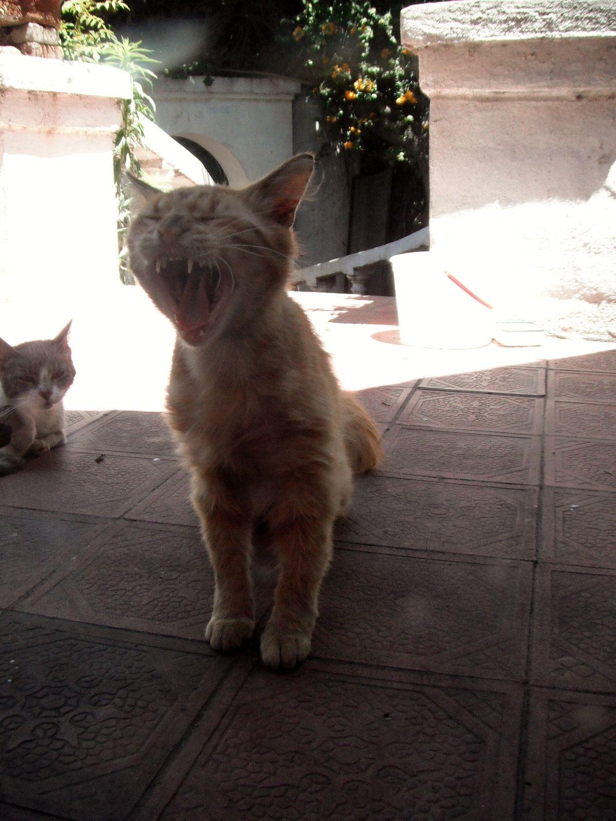 Kittys go RAWR!