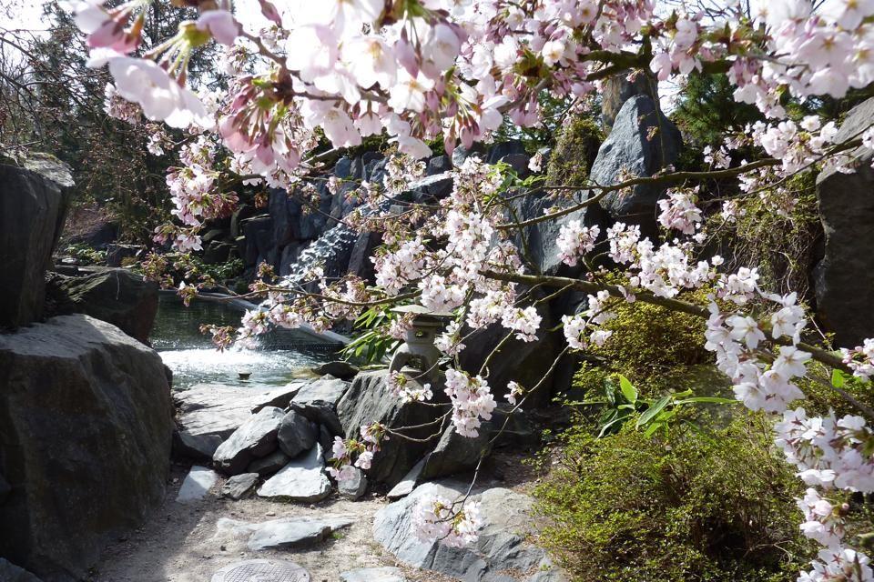 japanischer Garten, ega Erfurt