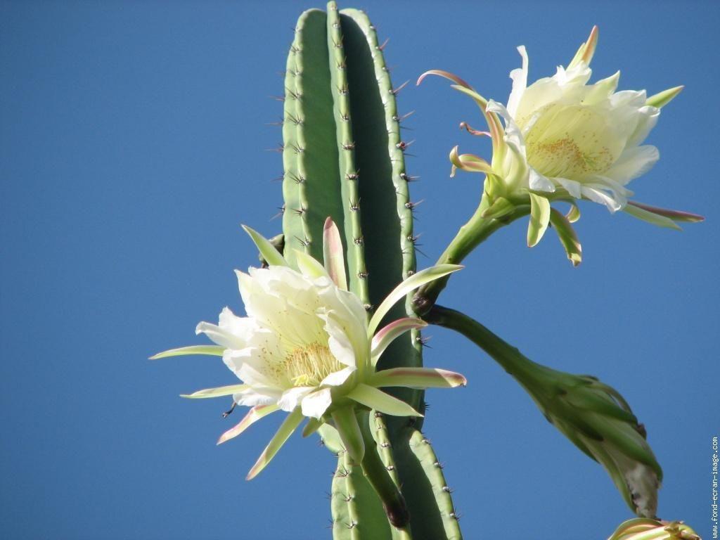 fleurs-cactees-L-1.jpeg (1024×768)