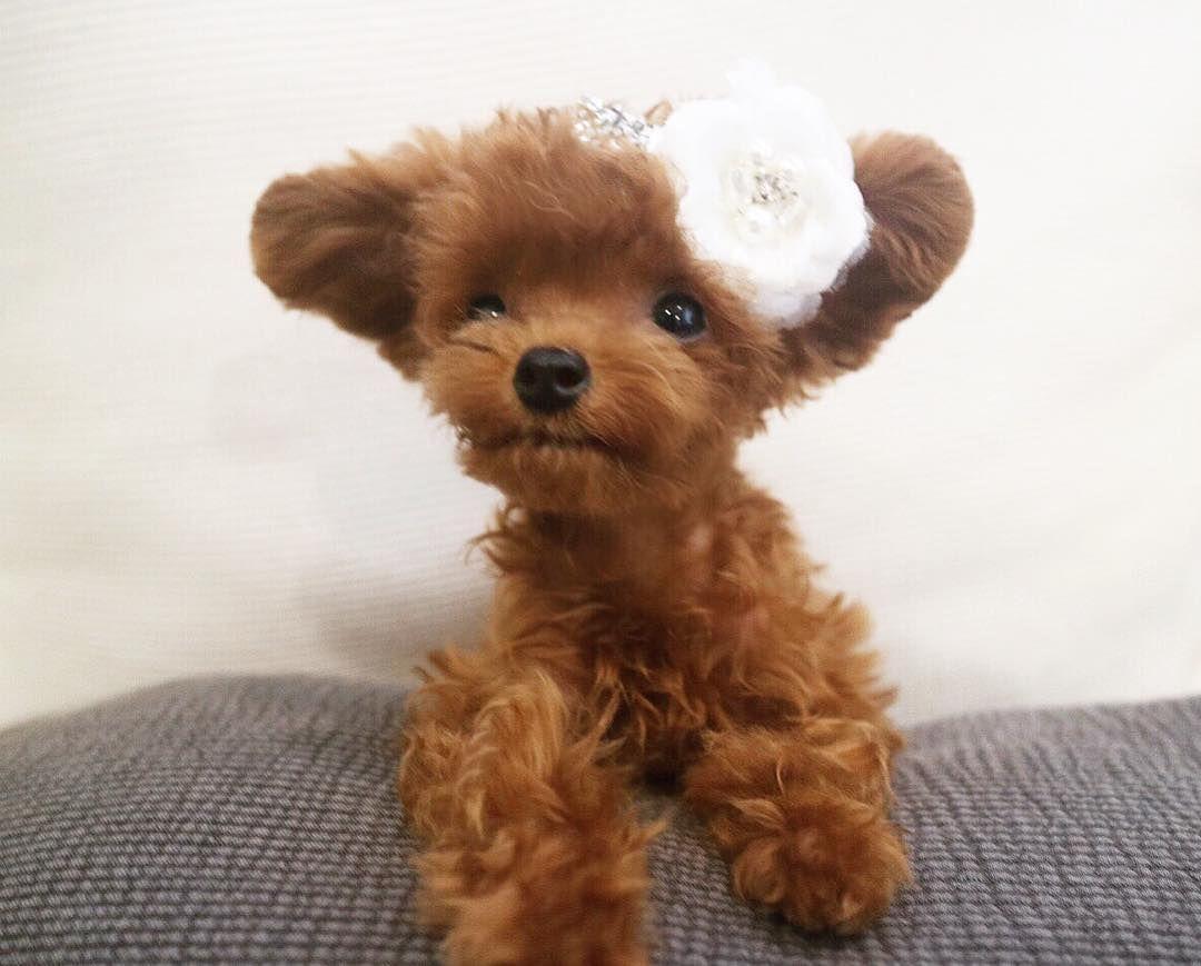 Baby animals instagram - Instagram Bibi_shasha Animals And Petsbaby