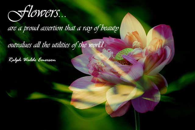 Beautiful Flowers Quotes 3
