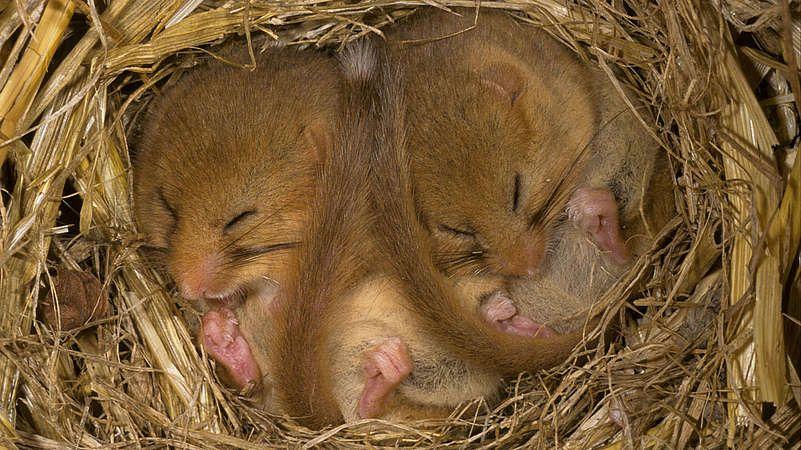 Achtung Niedlich Wildtiere Im Winterschlaf Susseste Haustiere Wilde Tiere Susse Tiere