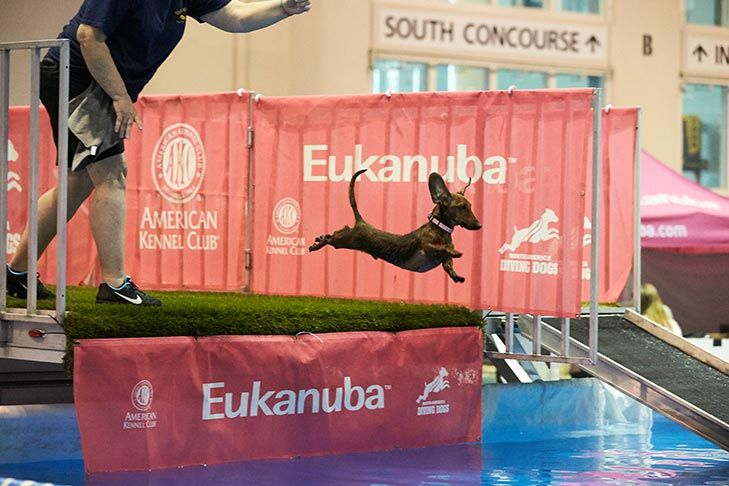 FirstTimer's Guide to the AKC National Championship