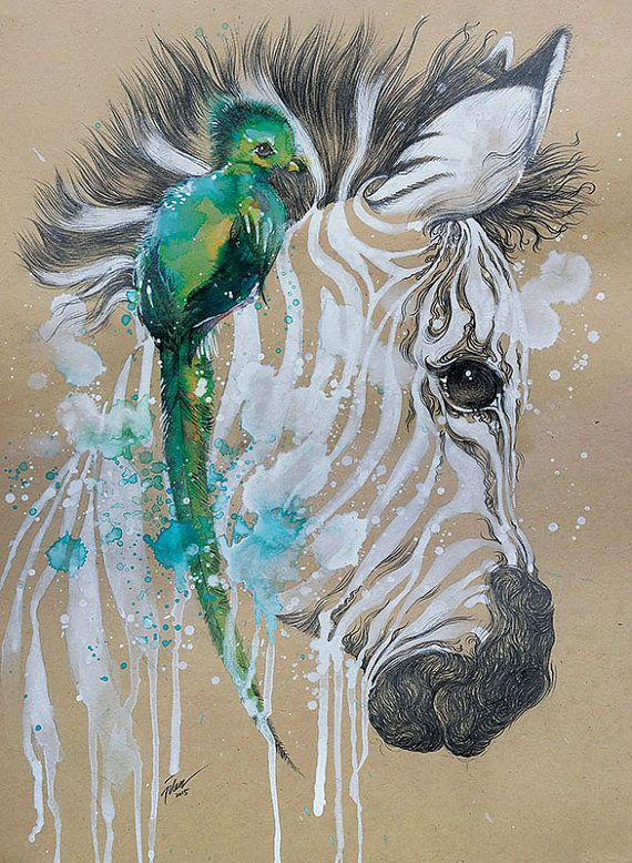 Quetzal And Zebra Watercolor With Pencil A4 A3 Art Print