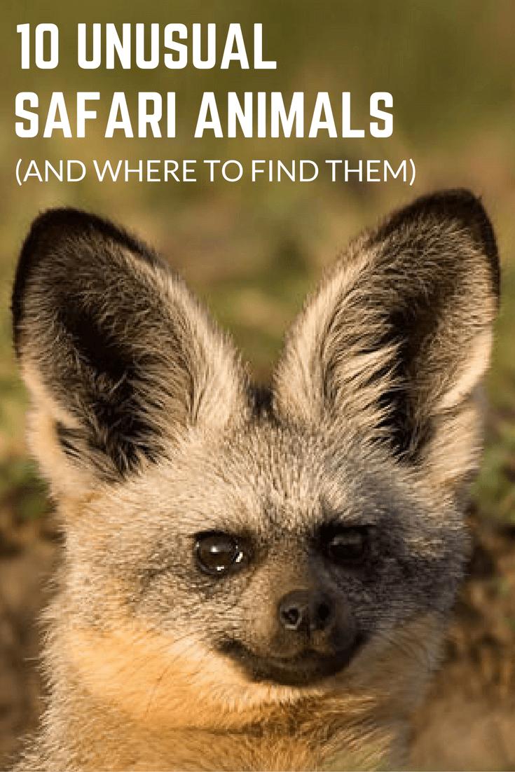 10 Unusual Species Sightings on Safari South africa