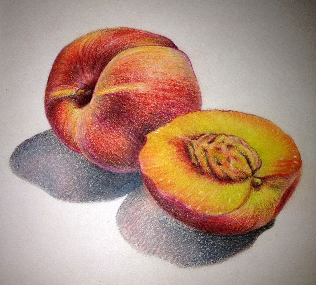 Lauren Yurkovich Food Illustration Fruit Sketch Fruit Art