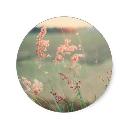 Pink wild flowers in a grass field classic round sticker photography gifts diy custom unique