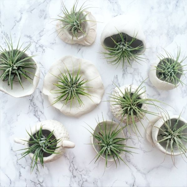 Miniature Plant Pots With Oven Bake Polymer Clay Succulent Pots Succulent Garden Diy Miniature Plants