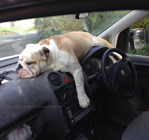 The best driver! #Bulldog