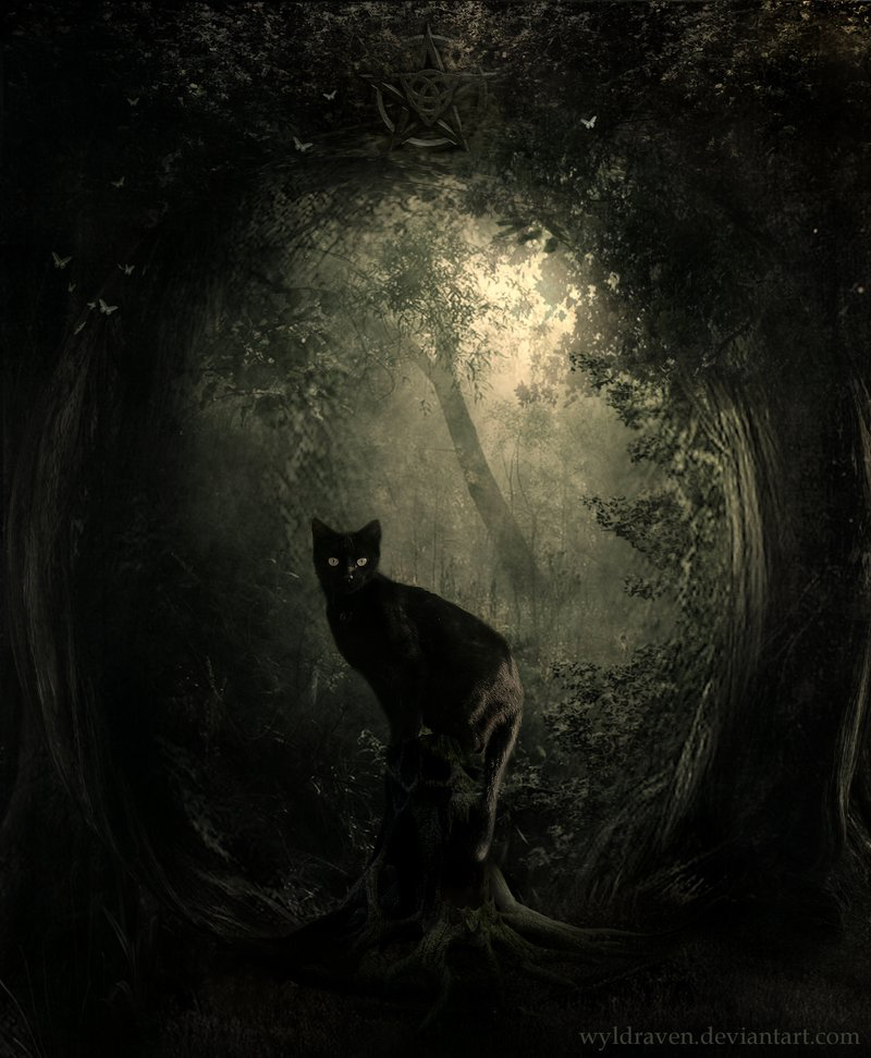 Even Thro Black Cats Are Not Evil Or Scary I Will Add This One To This Page Cats Cat Art Black Cat Art