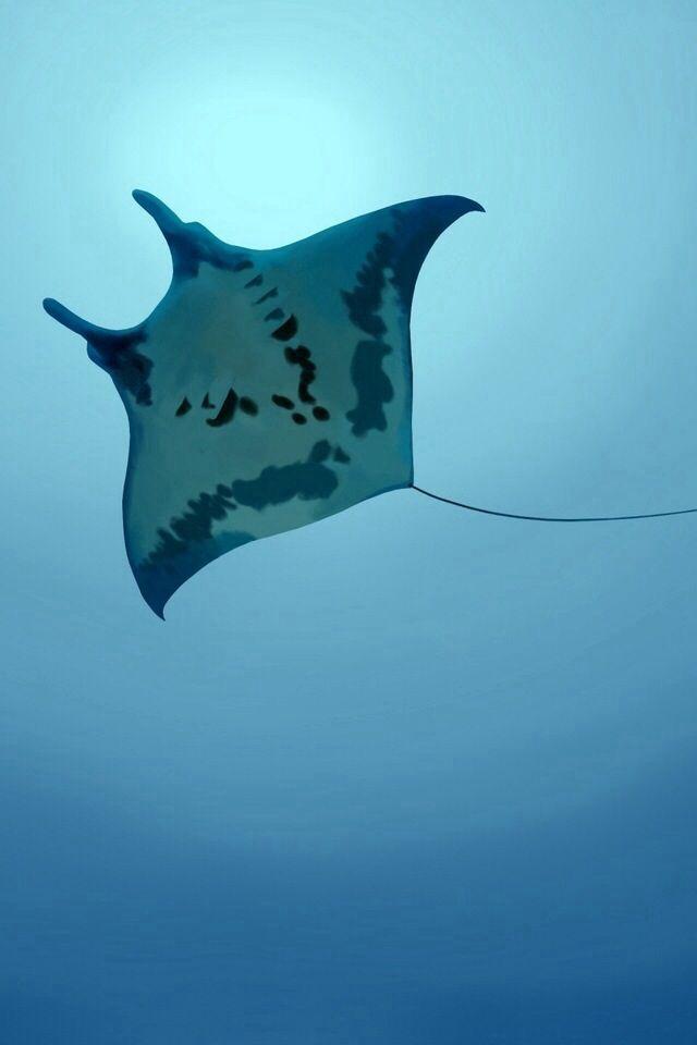 Wallpaper Iphone Phone Animal Animals Dyr Underwater