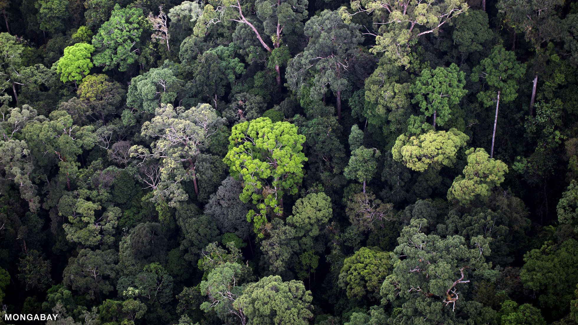 Biome Most tropical rainforest in Asia is found in
