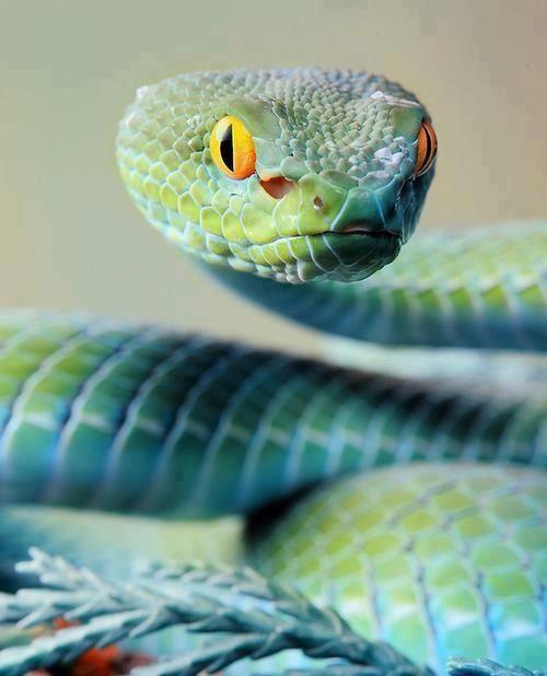 Beautiful Blue Snake !