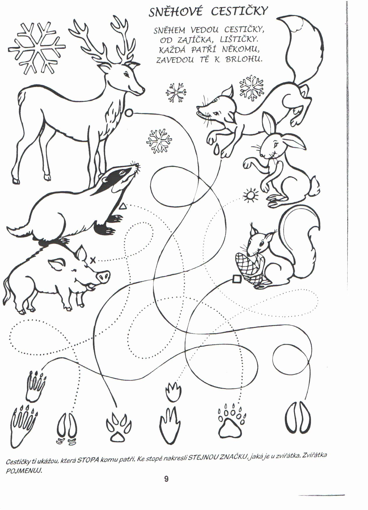Animal Tracks Coloring Pages In