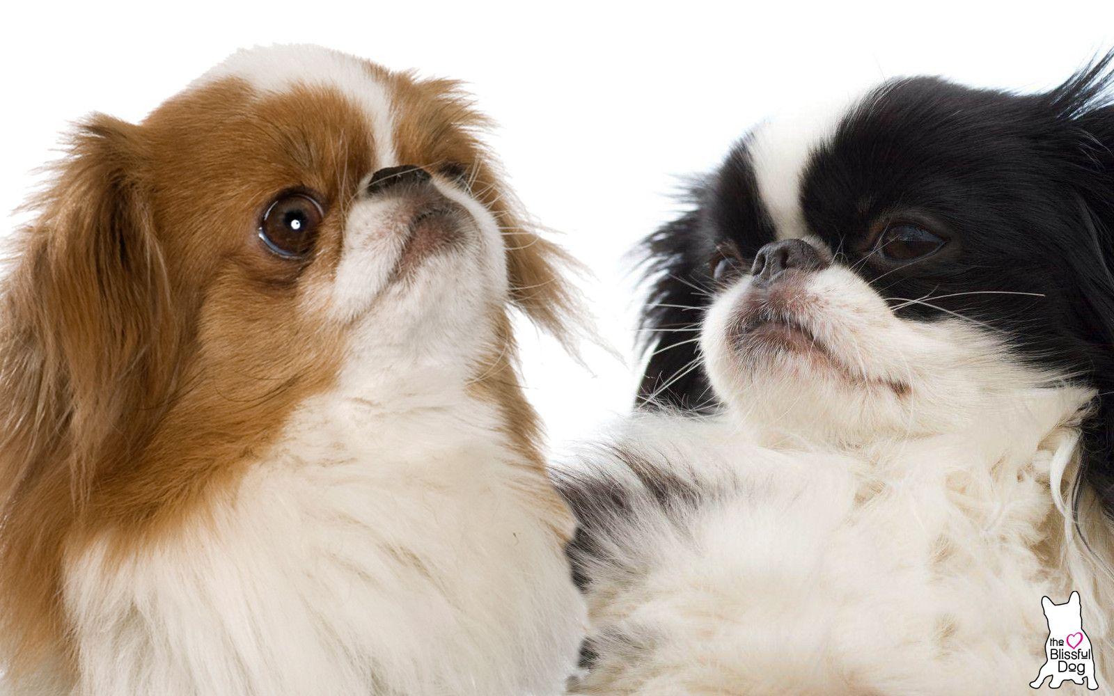 Watch Pin By Doug Chin On So Cute Cute Animals Cute Puppies