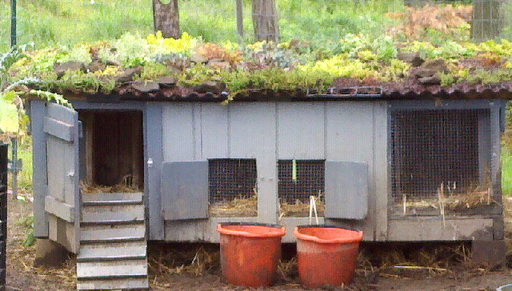 Green roof on the duck house.