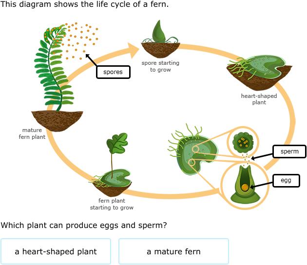 Moss Diagram Biology Biology Plants Evolution Of Plants Plant Science