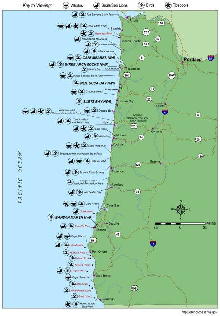 Oregon Coast Wildlife Map Whale Watching Locations Tons