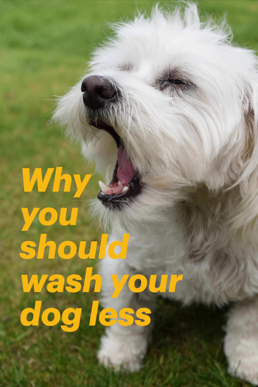 Pin On Dog Health Lifestyle Tips