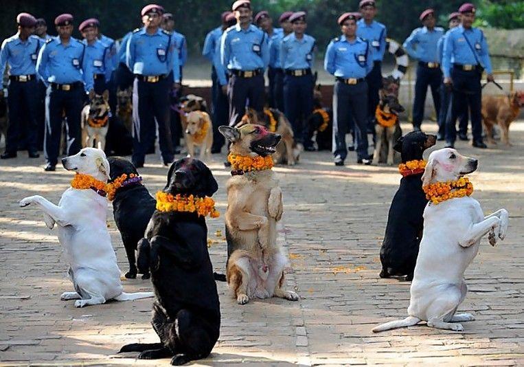 marigold dogs