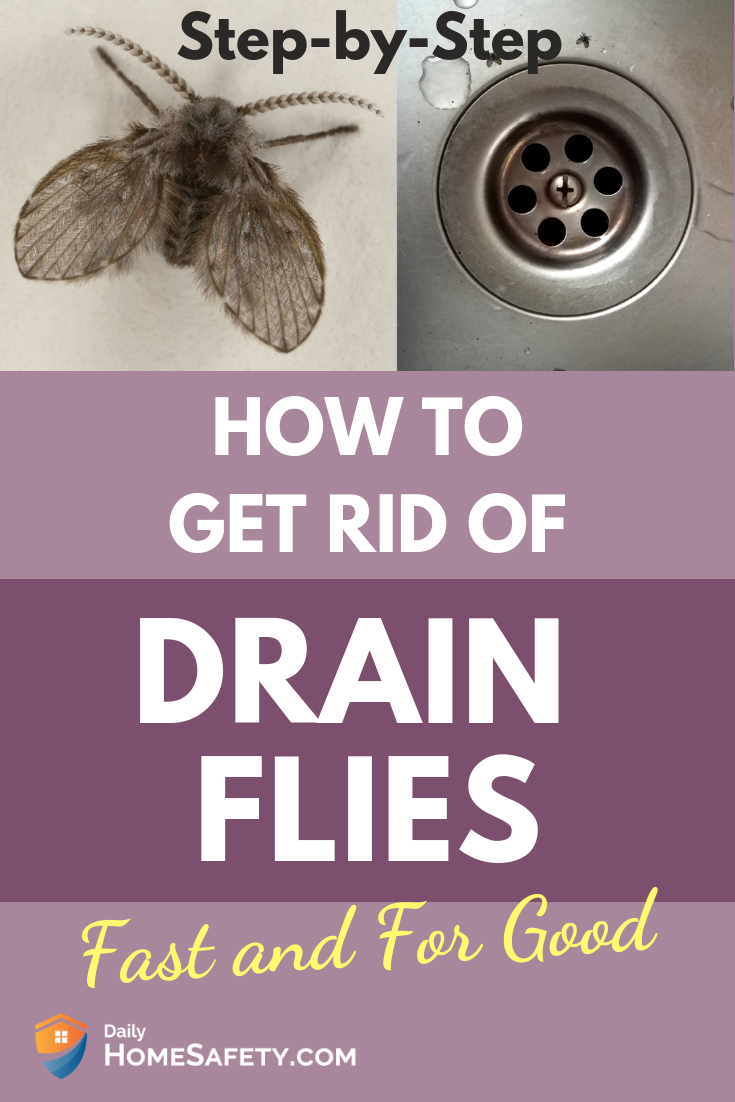 How To Get Rid Of Drain Flies Fast And For Good How To Get Rid How To Get Rid Of Gnats Drain