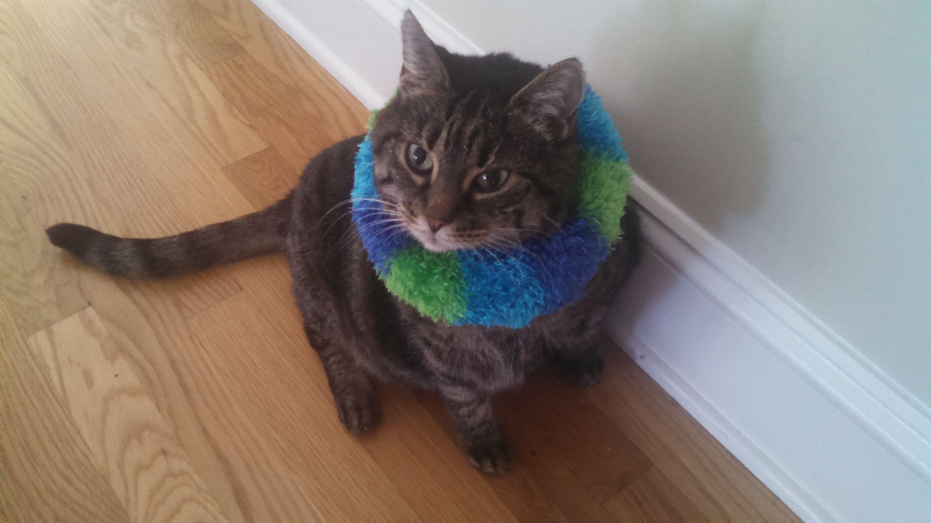 83f25a15a2bd37eac9f7627470657b21 - How To Get My Cat To Wear A Collar