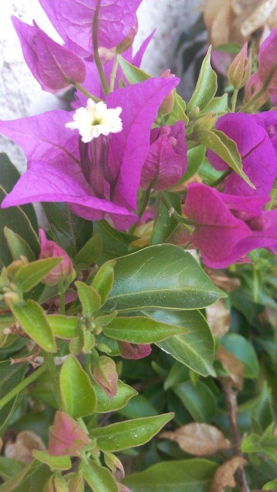 Violet tropical