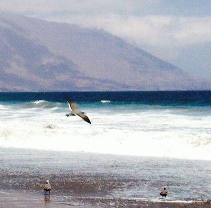 Iquique, Playa Brava.