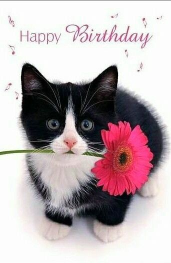 Katzen foto zum geburtstag