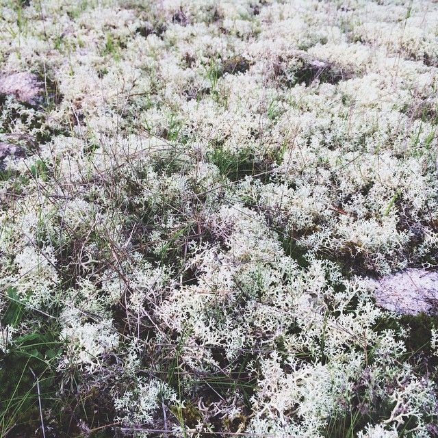 Like if it was a herald of winter... #moss #woods #nature #musgo #bosque #fiaisdabeira #portugaldenorteasul #vsco