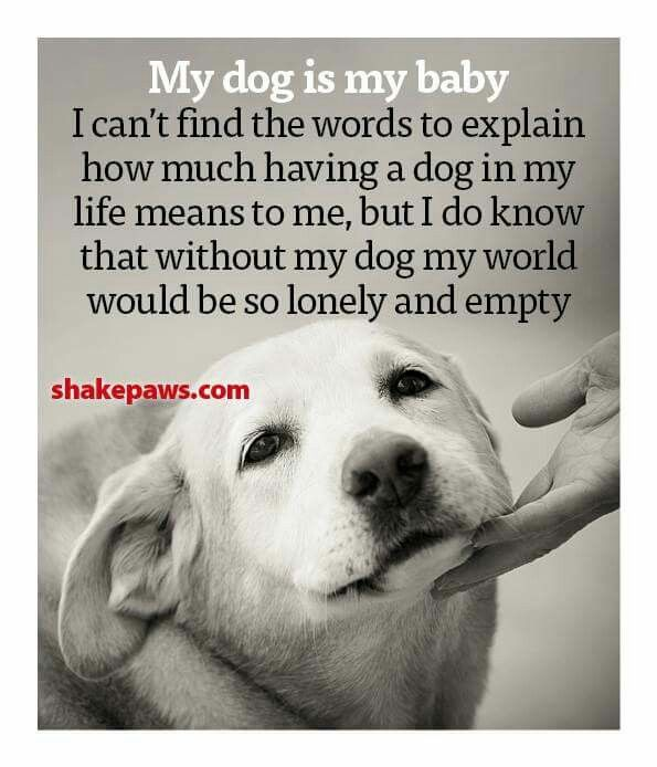 Love My Chihuahua Max Dogs Dog Quotes Dog Love