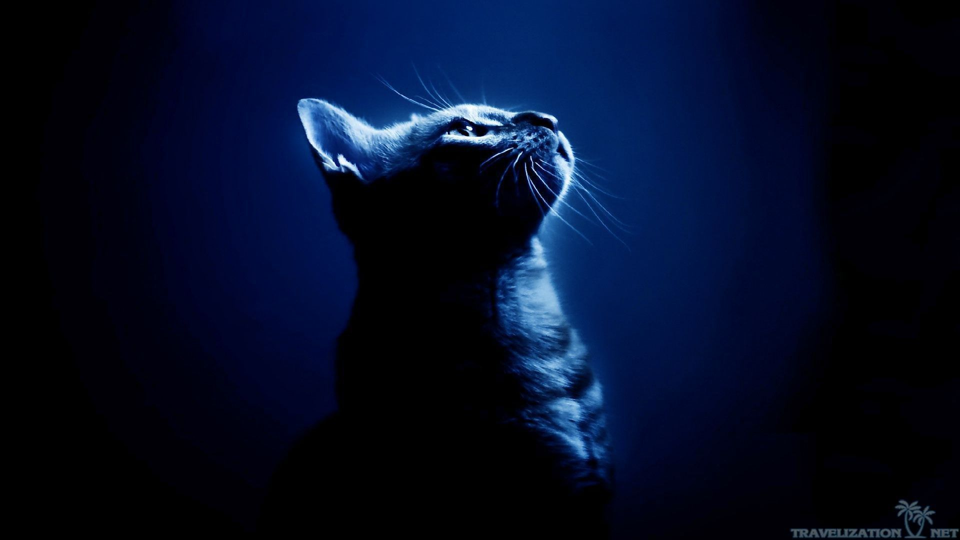 1920x1080 Amazingly Cool Cats Wallpapers 1920x1080px Cat Background Cat Wallpaper Cool Cats
