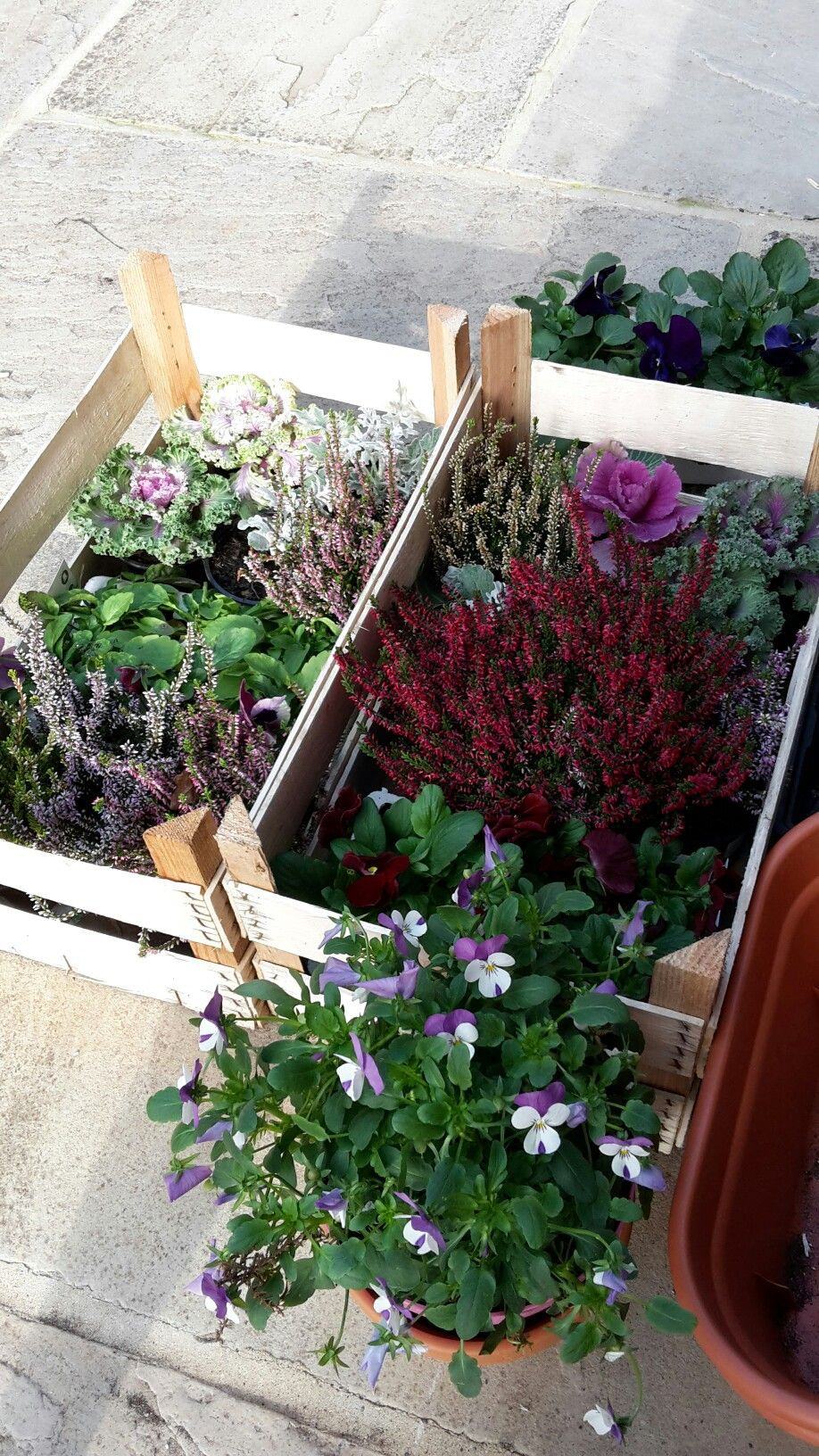 pin by clare kendall on winter balcony planting pinterest
