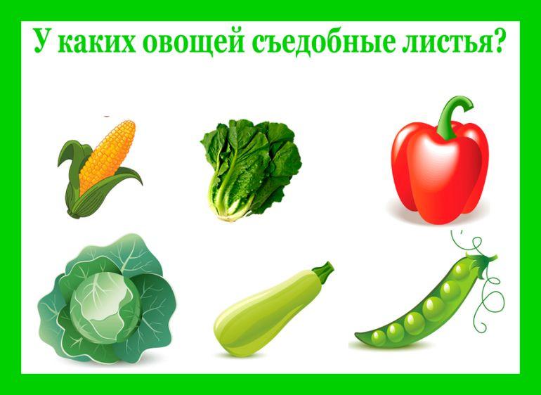 Какой овощ? - Babyblog.ru