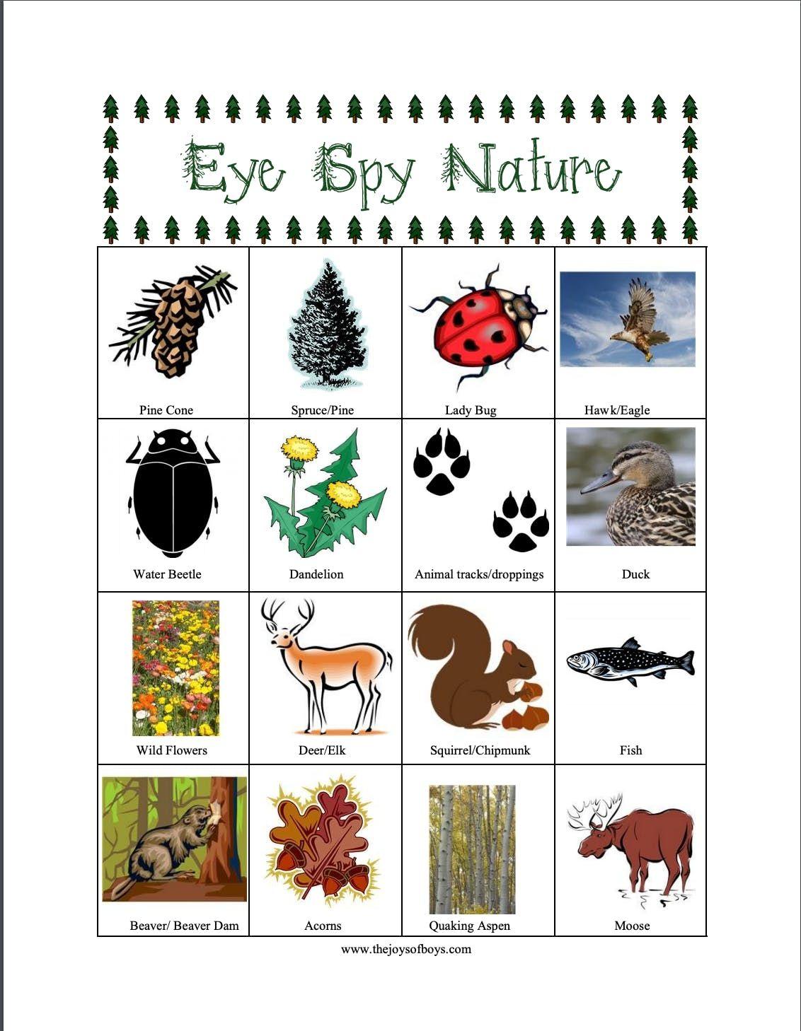 Eye Spy Nature Scavenger Hunt