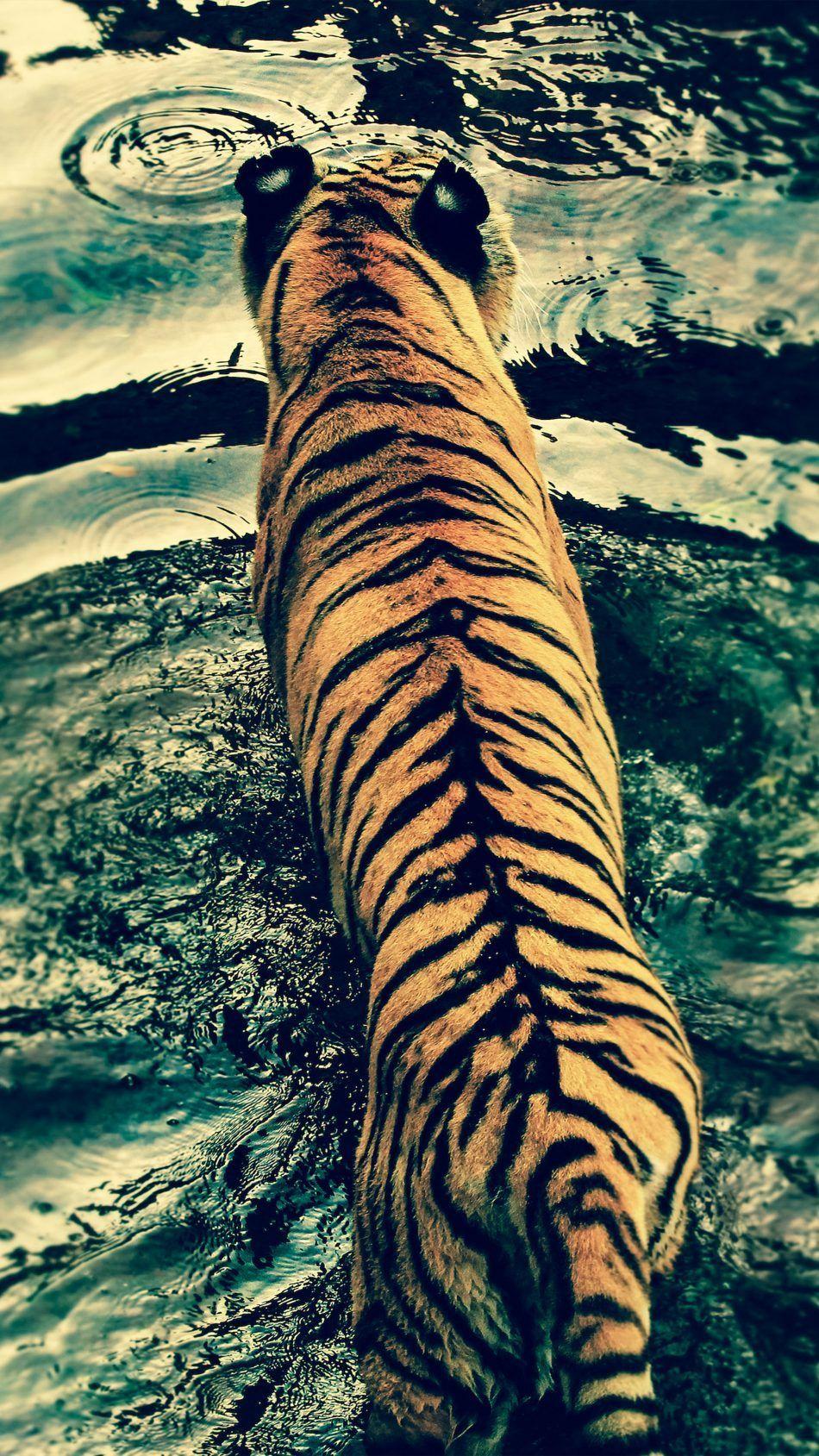 Iphone Ultra Hd Animal Wallpaper Hd Http Wallpapersalbum Com Iphone Ultra Hd Animal Wallpaper Hd Html In 2020 Tiger In Water Animal Wallpaper Animals